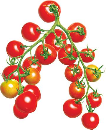 ミニ トマト 仕立て 方